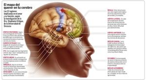 mapa del cerebro humano