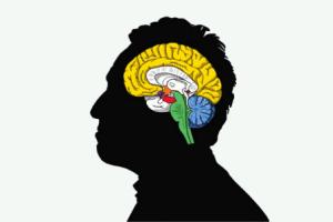 Conoce los procesos y cambios que se realizan en tu cerebro cuando ves pornografía...